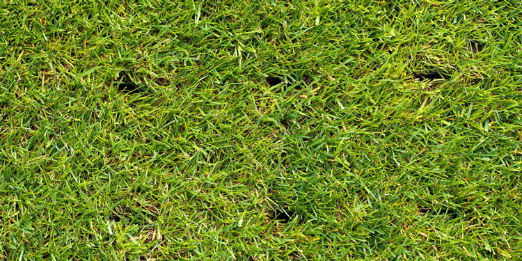 Picture of an aerated lawn